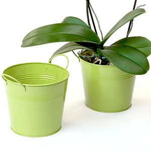 "6.5"" Tin Pot Lime Green"