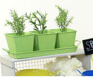 Tin Herb Pot Lime G...