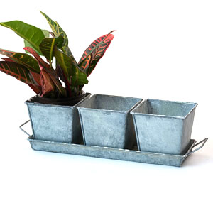 Vintage Herb Container
